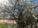 Gützkow - Frühling